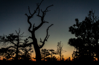The sun sets behind the trees on the Rim Trail in Byrce Canyon