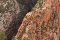 Looking back at the trail to Angels Landing.